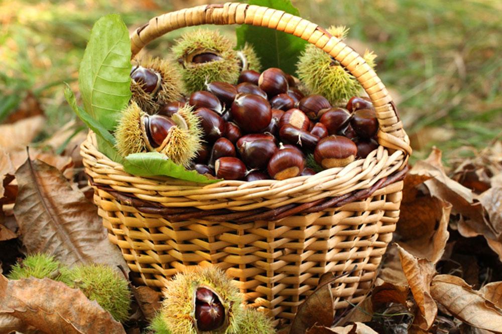 castagne-marroni-autunno-piemonte